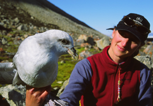 Monitoring expert with northern fulmar