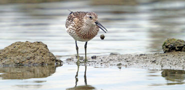 Great knot: ken/Flickr Creative Commons 2.0